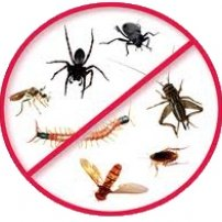 pest-control-aus.jpg